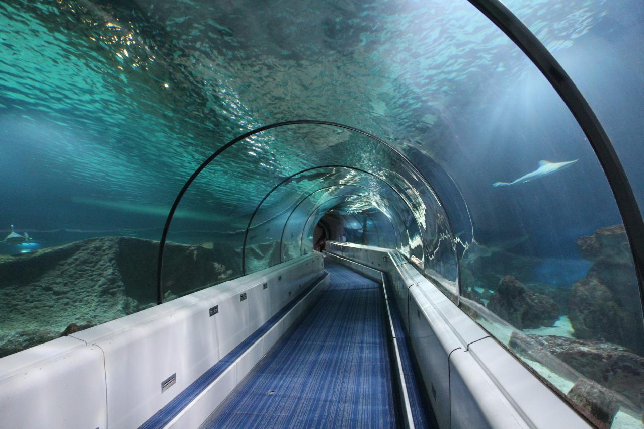 Bleu comme ... le tunnel des requins (Marineland - Antibes)