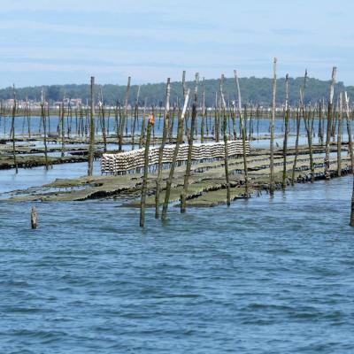 Les parcs à huîtres du bassin d'Arcachon