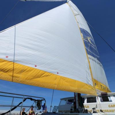 Découverte du bassin d'Arcachon sur le catamaran TIP TOP ONE le top !