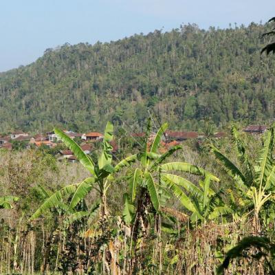 village perdu dans la forêt