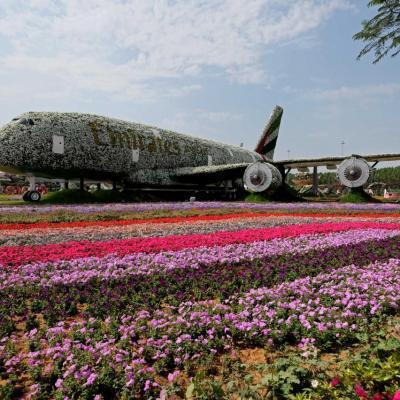 Miracle garden, le plus grand jardin du monde dans le désert