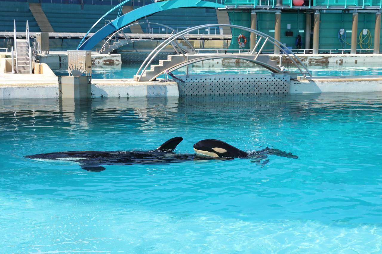 Bleu comme ... le bassin de bébé orque (Marineland)