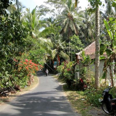 Bali 2378_GF