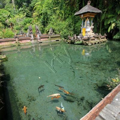 Bali 2434_GF