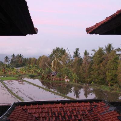 Un endroit perdu au beau milieu des rizières
