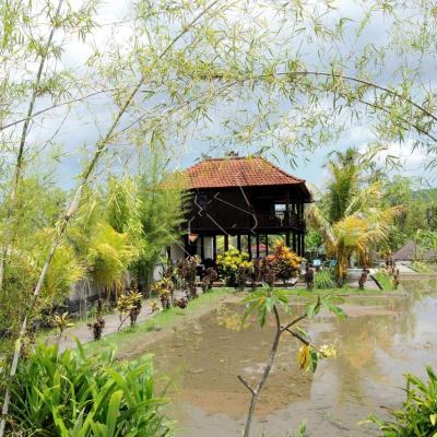Bali - J9 - Du coeur des rizières prêtent pour la récolte jusqu'à Gilimanuk pour embarquement à Java