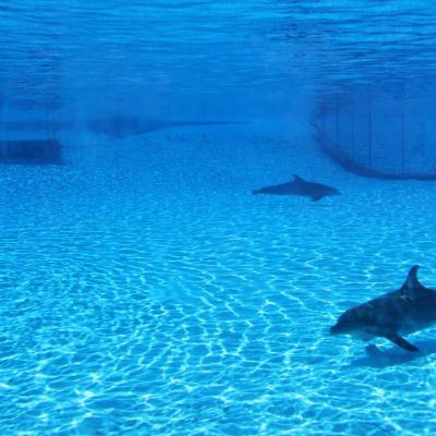 Bleu comme ... le lagon des dauphins de Marineland