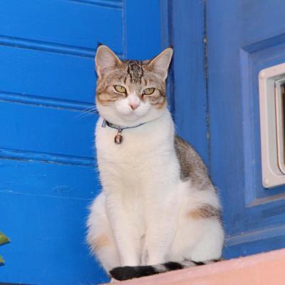 Bleu comme ... la chatière de ce petit chat à Collioure