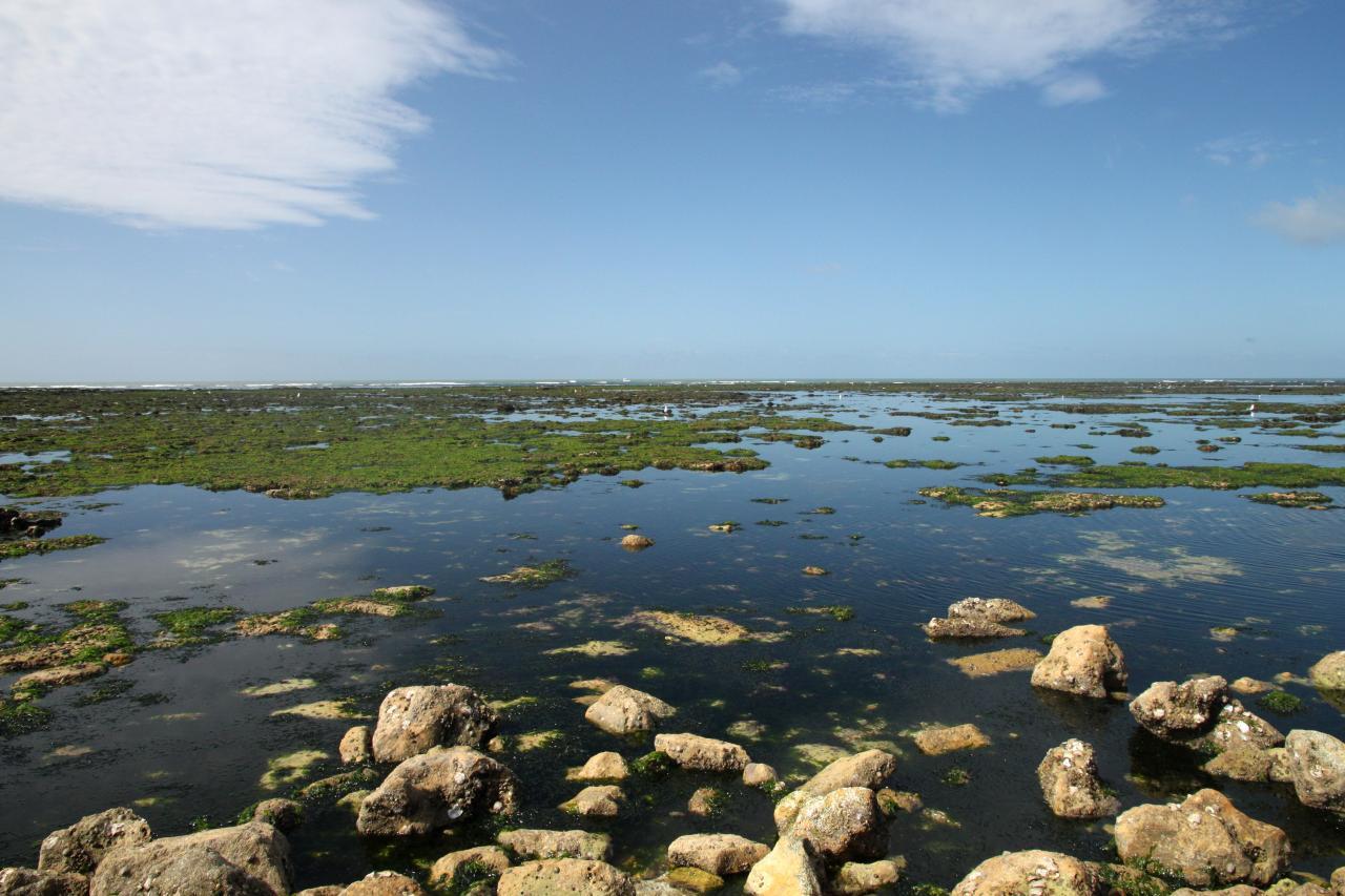 Bleu comme ... la marée basse autour du phare de Cordouan (17)
