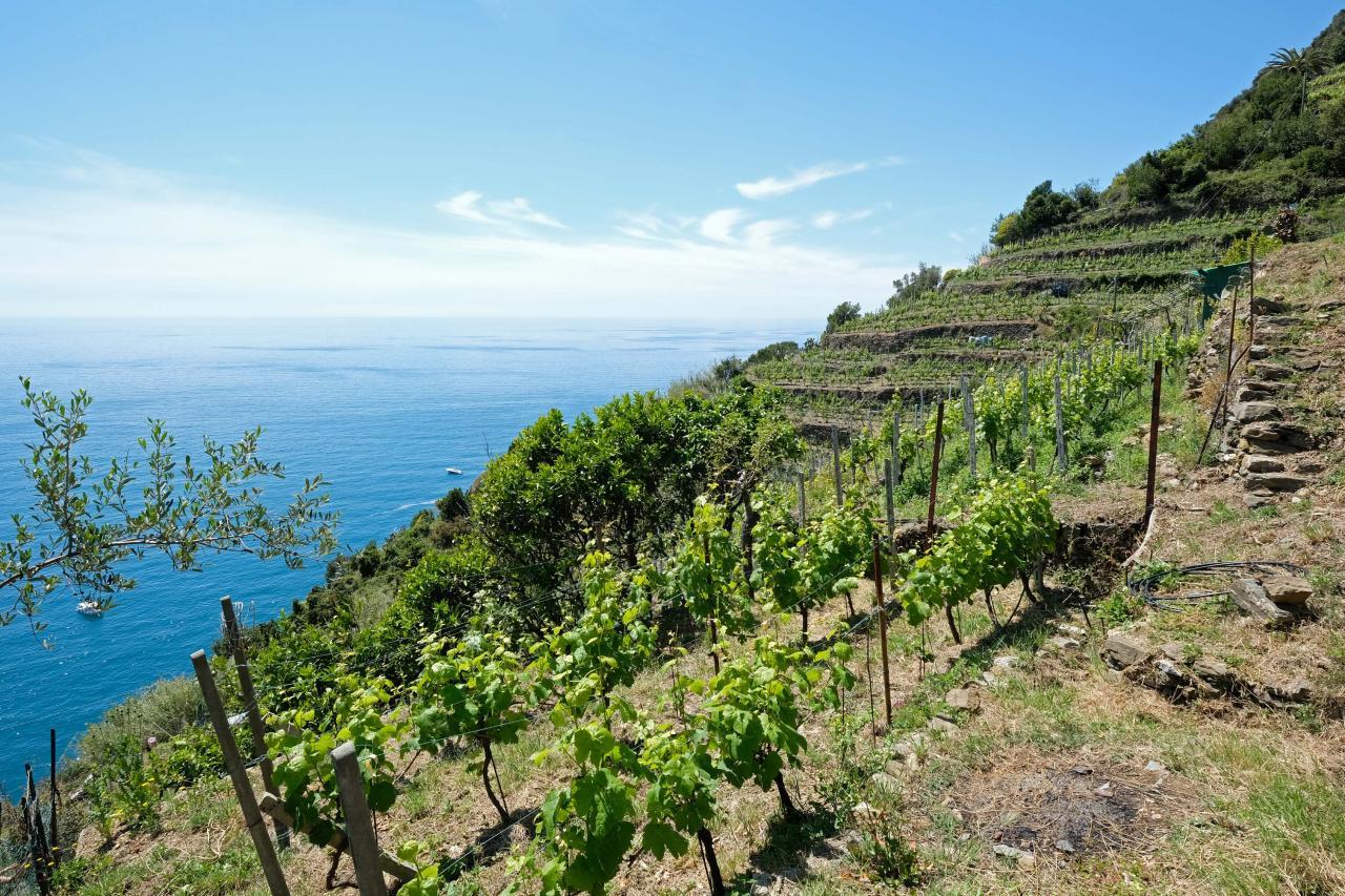 les vignes et les murets de pierre sèche (alignés ils font 6729 kms)