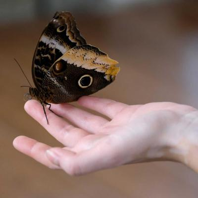 jardin de papillons sous 9 dômes où les papillons volent librement