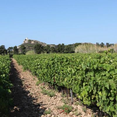 le domaine de l'île des Embiez propose un rosé réputé (vins AOP)