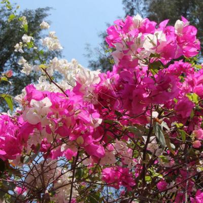 Gili Air, île très fleurie