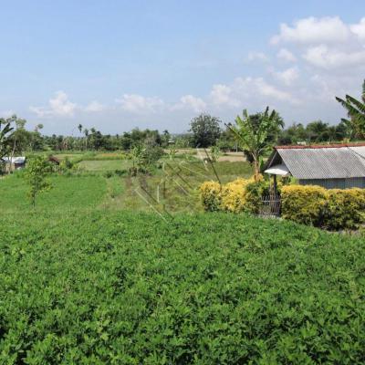 La campagne non loin du centre de Bali