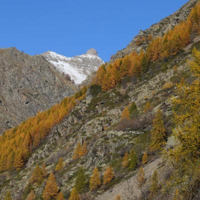 Les couleurs chaudes de l'automne avant la neige ... un régal !