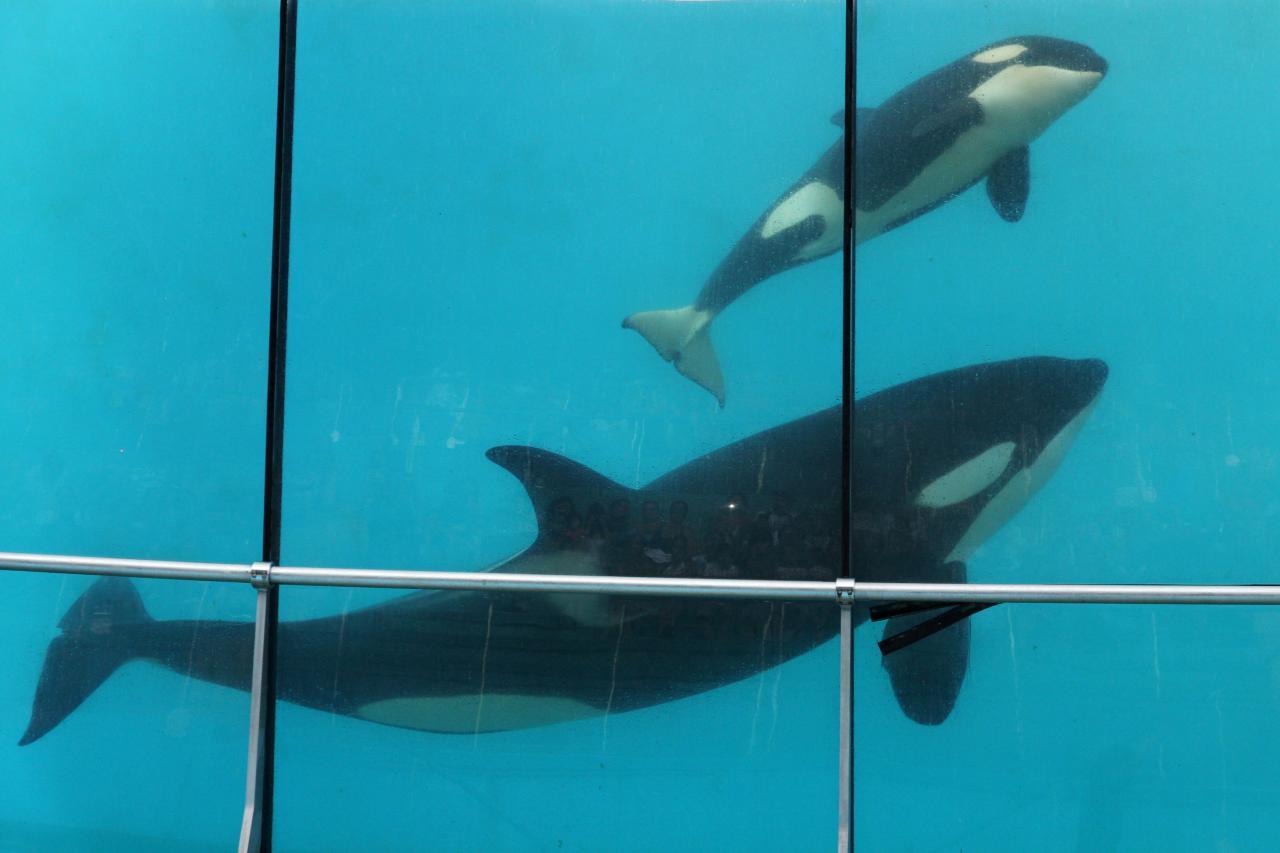 bleu comme ... le bassin de Wikie et son bébé à Marineland