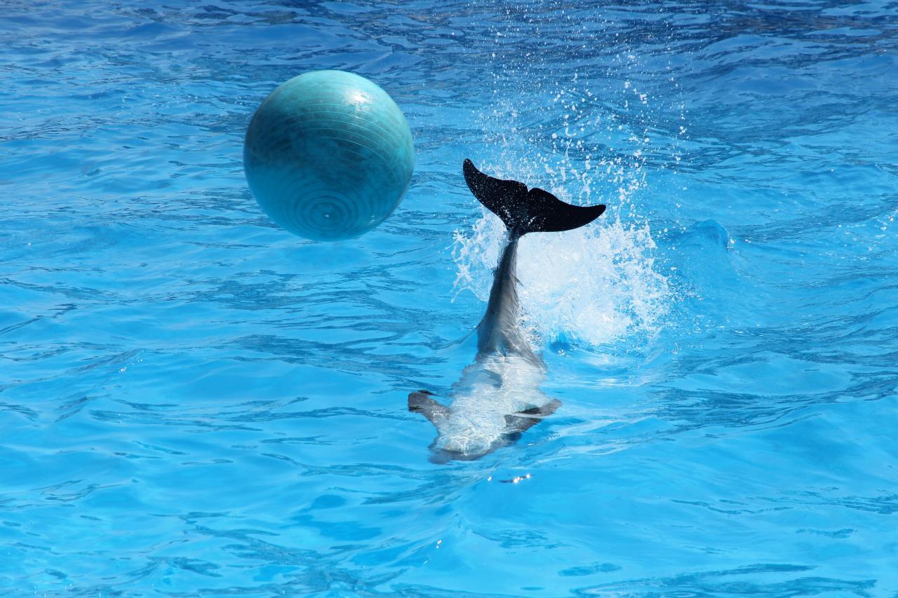 Bleu comme ... le ballon de Nala, bébé dauphin à Marineland (Antibes)