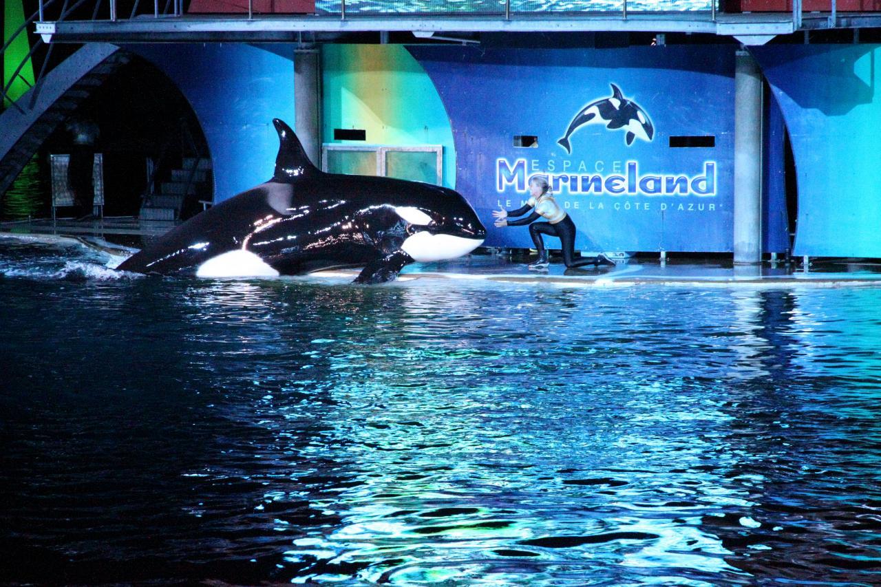 bleu comme ... le bassin des orques