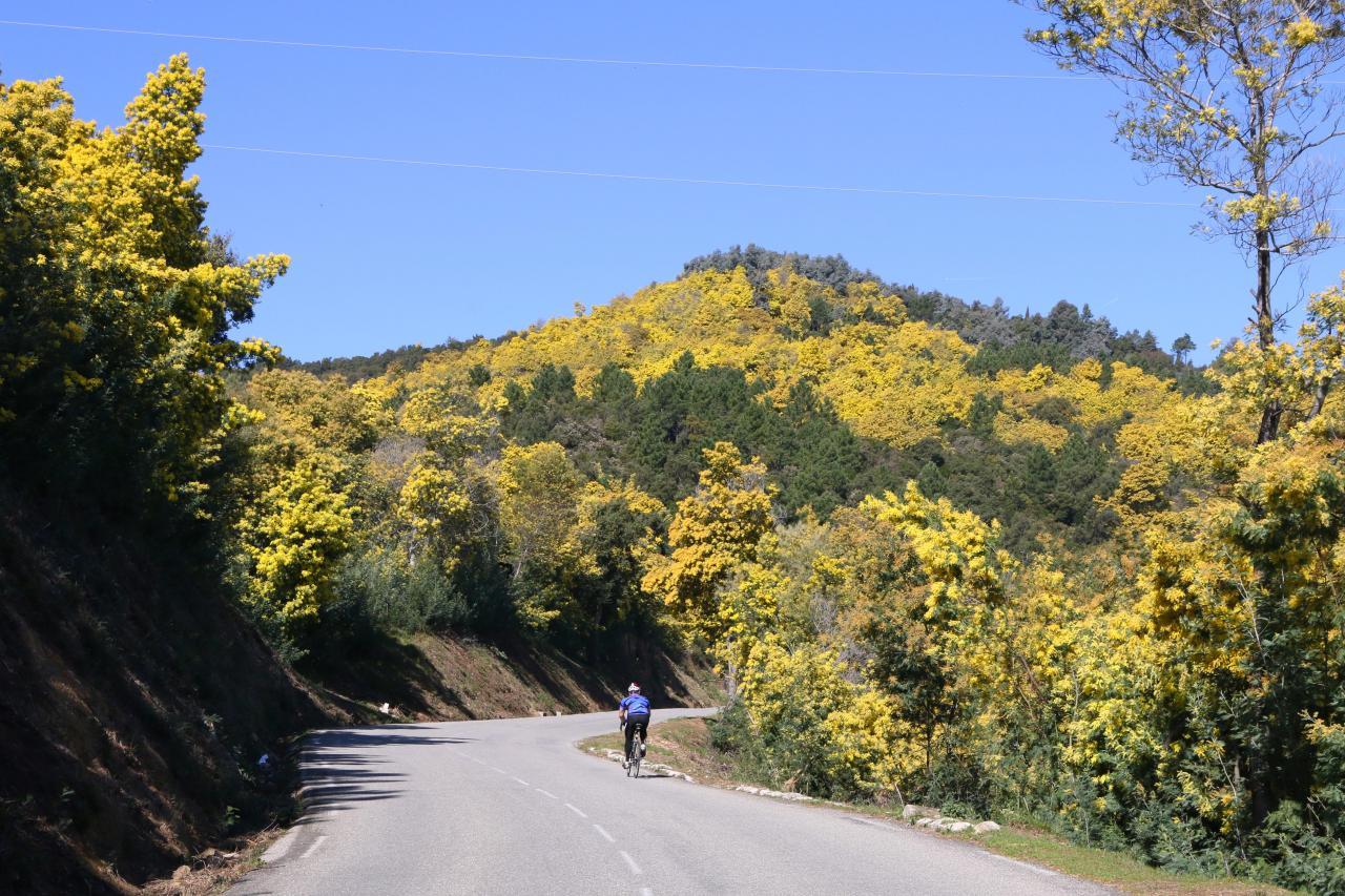 Le massif du Tanneron, massif du mimosa, surplombe Mandelieu