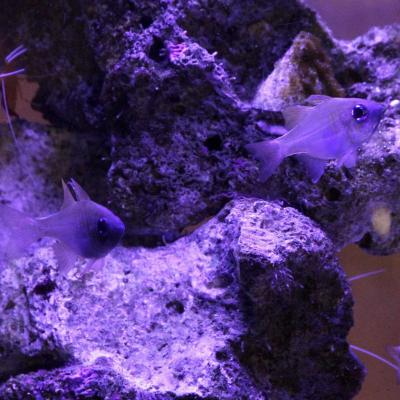 Bleu comme ... les petits poissons de l'aquarium de Marineland