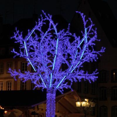 bleu comme ... l'arbre de noël à Strasbourg