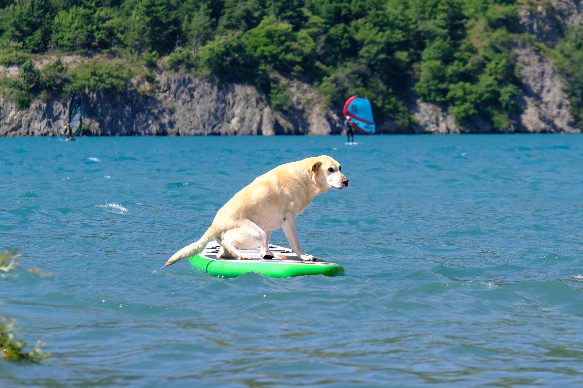 Cani-paddle :-)