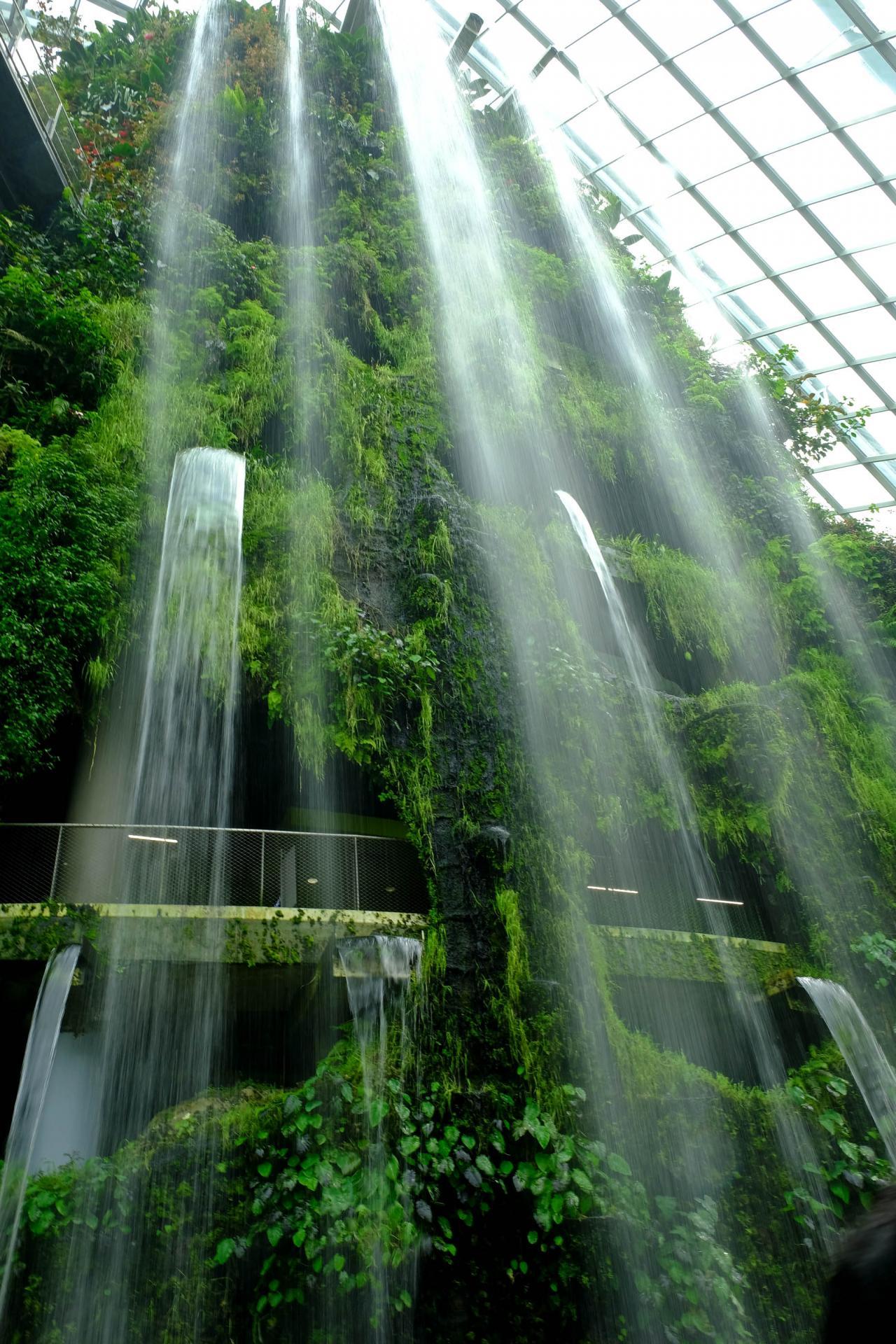 Cloud Forest reproduit un climat de forêt tropicale en altitude de 2000m